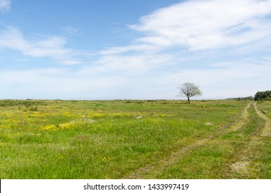 Bright green and yellow grassland with a lone tree by the coast of the swedish island Oland