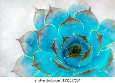Bright green-blue cactus succulent on soft light gentle focus background. Beautiful natural cactus, top view