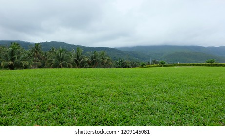 Bright greens. Colorful green grass under a cloudy gray sky on top of a hill. Camiguin, Philippines. February 2017.