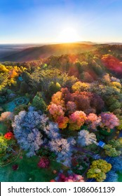 Bright hot vertical panorama with rising sun over horizon in Blue Mountains of Australia - Mount Wilson town during autumn season when leave trees are colourful.