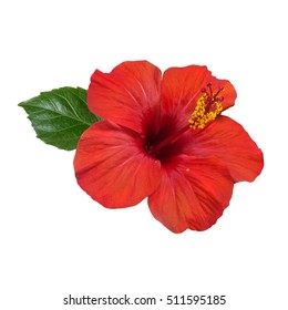 bright large flower of red hibiscus isolated on white background