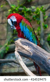 bright and large macaw parrot on a branch close-up