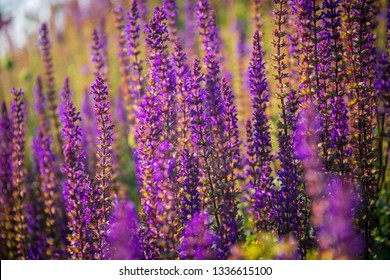 Bright lavender flowers.