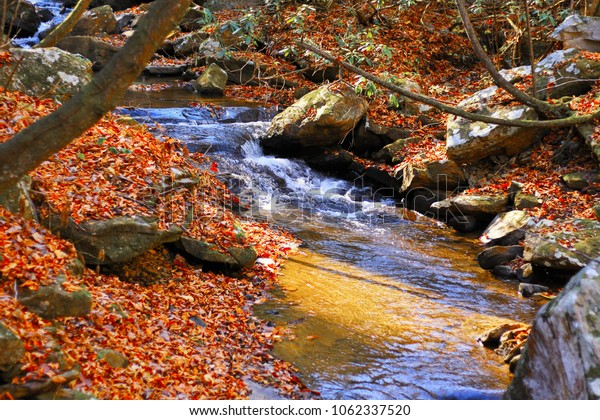 bright leaves by the river