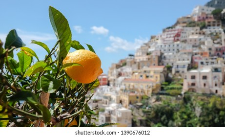 A bright lemon tree in Positano, with background views of the cliffside town. It was a warm day in spring, with a full sun and clear skies.