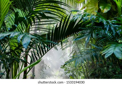 bright light shining through the humid misty fog and jungle leaves, jungle canopy in the mist, lush green tropical forest