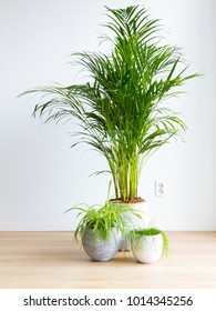 bright living room with houseplants on the floor, areca palm, spider plant and rhipsalis cactus