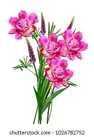 Bright lupine flowers and peonyisolated on white background