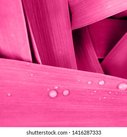 Bright magenta pink leaves top view minimalistic background. Floral backdrop concept. Color of the summer 2019. Flower petals close up. Floristry hobby. Web banner, greeting card idea