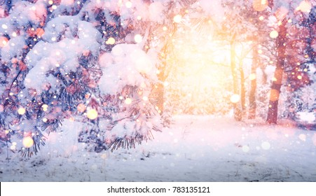 bright magic glow in Christmas forest. Winter background. Glowing snowflakes fall on snowy trees and snow. Winter landscape at sunrise in morning