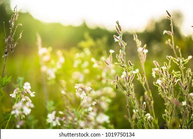 Bright meadow wild beautiful flowers on green nature background. Spring view