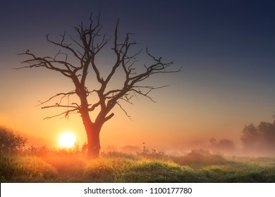 bright morning landscape in savannah with large old dry tree at sunrise against clear blue sky. majestic tree in morning light in tall grass. sun on horizon rises above wild nature in foggy morning