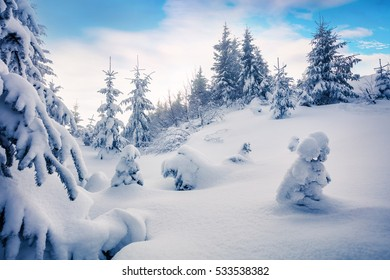 Bright morning scene in the mountain forest after heavy snowfall. Misty winter landscape in the snowy wood, Happy New Year celebration concept. Artistic style post processed photo.