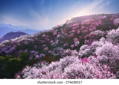 bright mountain flowers in full bloom in spring