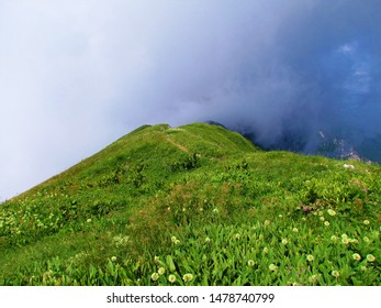 Bright mountain ridge at Crna prst in Julian alps in Slovenia lit by sunshine overgrown with grass and alpine leek or victory onion (Allium victorialis) and thick fog behind the ridge - Shutterstock ID 1478740799