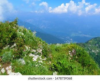 Bright mountain wild garden at Crna prst in Julian alps in Gorenjska, Slovenia full of  white blooming silvery yarrow (Achillea clavennae) and yellow alpine sun rose (Helianthemum alpestre) - Shutterstock ID 1478739368