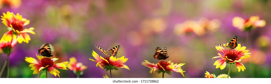 bright natural panoramic background with butterflies sit in a row on flowers in a Sunny summer garden