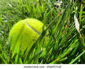 A bright neon tennis ball in the luscious green grass - Shutterstock ID 1966957150