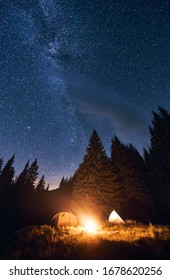 Bright night sky is strewn with stars and Milky Way. Silhouettes of huge fir trees add magic to the landscape. Evening camping in a pine forest with a burning campfire near two tourist tents