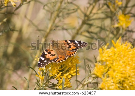 Bright Orange Black Brown White Butterfly Stock Photo Edit Now
