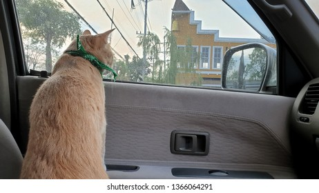 a bright orange cat wearing fabric collar standing on the seat inside a car.A pet travel with owner.