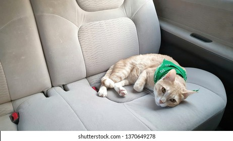 a bright orange cat wearing fabric collar who has orange eyes lying on the seat inside a car.A pet travel with owner.