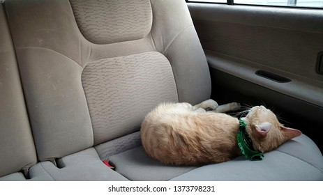 a bright orange cat wearing fabric collar sleeping on the seat inside a car.A pet travel with owner.