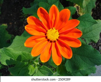 Bright orange flower close-up