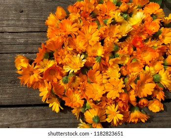 Bright orange flowers of calendula officinalis.