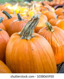Bright Orange Pumpkins