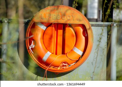 bright orange vintage lifebuoy surrounded by trees and overgrown with moss