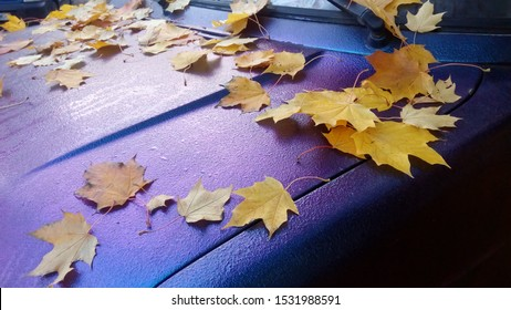 Bright orange yellow leaves that just fallen lie on the iridescent surface of the car body.  Autumn foliage lies in the morning in the dew on the mother-of-pearl hood of the car.