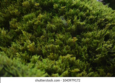 Bright photo of green wet moss with due