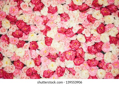bright picture of background full of white and pink peonies
