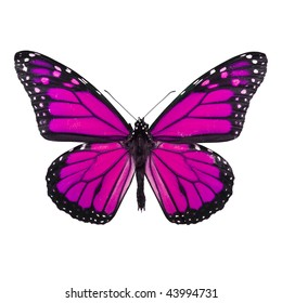 Bright Pink Butterfly Isolated on White Background