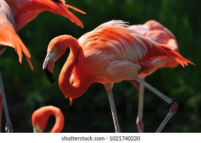 Bright pink flamingo in Toronto Zoo