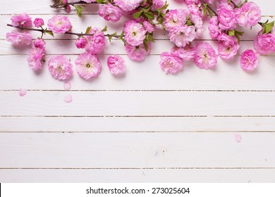 Bright pink   flowers on white  painted wooden planks. Selective focus. Place for text.