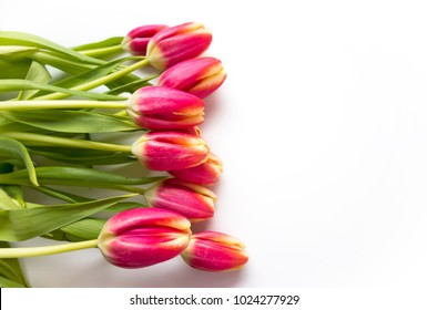 Bright pink tulips on a white background.