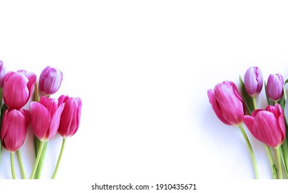 Bright pink tulips on a white background. Spring flower arrangement. Background for greeting cards.