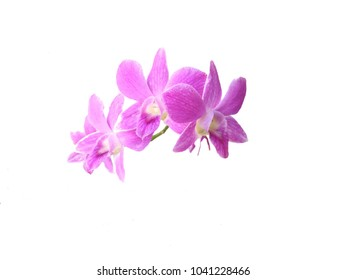 Bright pink violet orchid on white background.