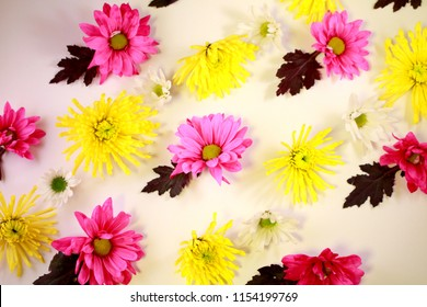 Bright pink, yellow, and white flowers arranged in lines to form a pattern on a white background