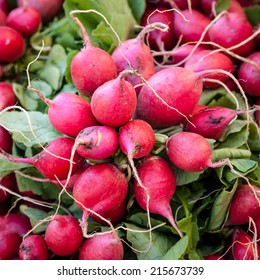 Bright pinkish red organically grown bunches of European radishes (Raphanus sativus) on sale at a local farmer's market