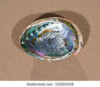 Bright polished Rainbow Abalone Shell on wet sand on the beach at sunrise.