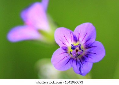 Bright purple flower on a green background on a sunny day, great contrast, a great background for a desktop or screen saver