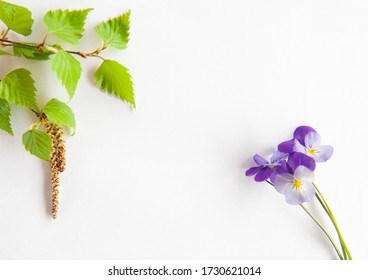 Bright purple flowers And a birch branch  on a white background. Postcard, spring time, place for text, Allergy to pollen, antihistamine drug