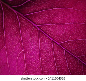 Bright purple leaf texture for a backlit background behind.