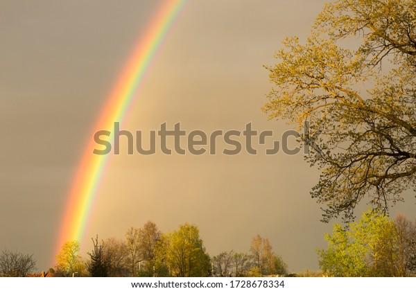 bright-rainbow-closeup-on-background-600