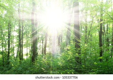 bright rays of the sun in a green forest