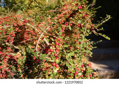 Bearberry Poisonous