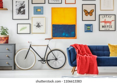 Bright red blanket on a navy blue settee standing next to a vintage bicycle against white wall with a gallery of posters in living room interior. Real photo